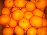 orangehassakufshoto